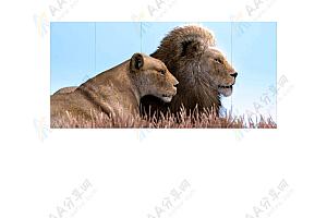 纯CSS3实现相册图片3D立体翻转切换特效