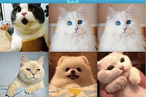 原生js实现鼠标点击按钮图片相册随机排序切换特效代码
