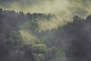 纯CSS实现早晨森林薄雾笼罩特效动画