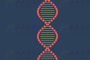 模拟DNA基因组动态3D螺旋状可拖拽变形js动画